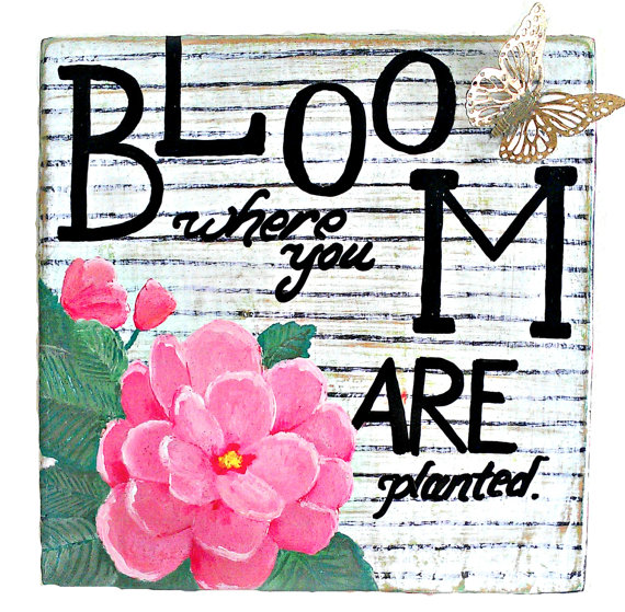 Bloom Where You Are Planted